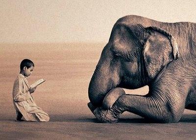 https://i0.wp.com/www.elvacanudo.cl/sites/elvacanudo.cl/files/imagecache/380x285/imagen_noticia/humanos_y_animales.jpg