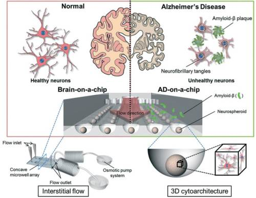 small resolution of brain on chip schematic diagram of the brain on a chip