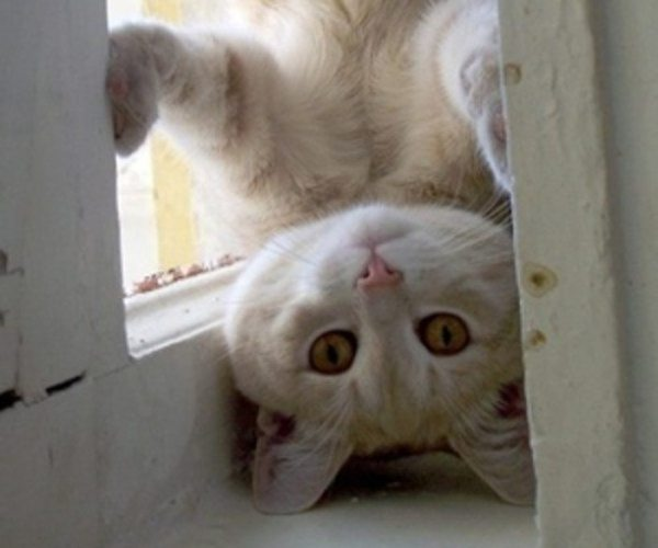 Introduction to A Touch of Gold: photo of an upside-down kitten.