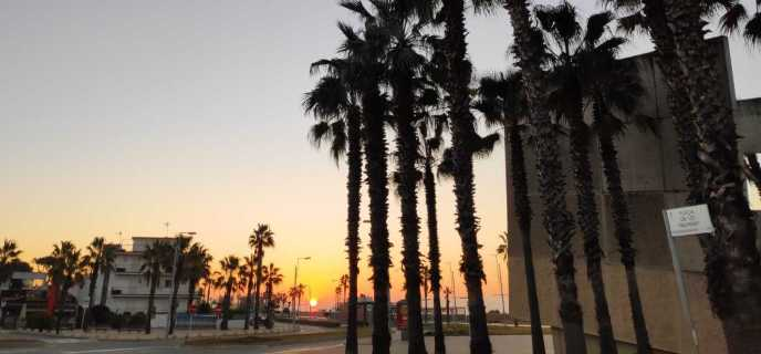 Amanecer en la playa de castelldefels, rodeada de palmeras y con el sol de un color naranja potente