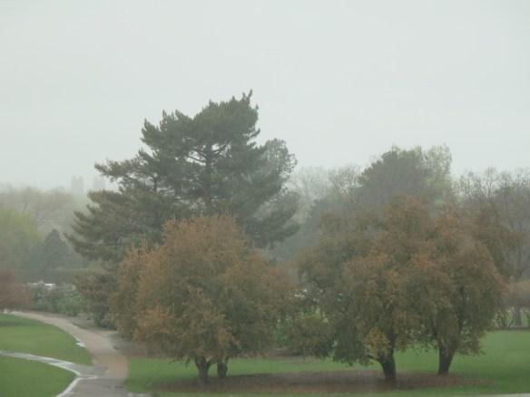 Rainsoak