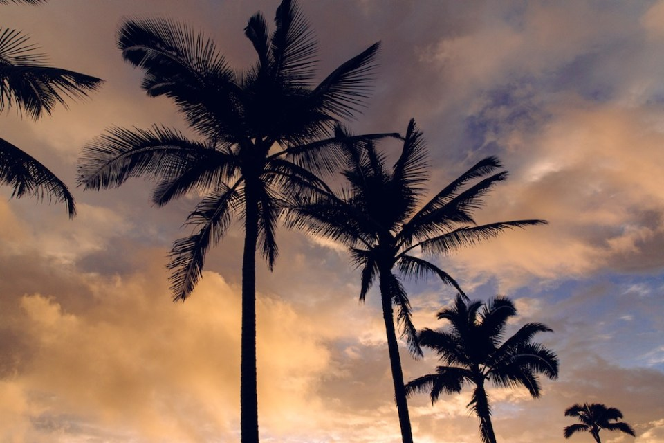 Melissa_Findley-Tuula-Hawaii_Travel_Diary-47