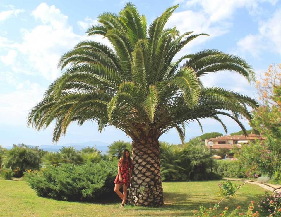 Panorama-palmier-sardaigne-elygypset