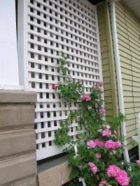 Build DIY Wooden rose trellis designs PDF Plans Wooden ...