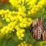 Flor de acácia um santo remédio no combate a depressão