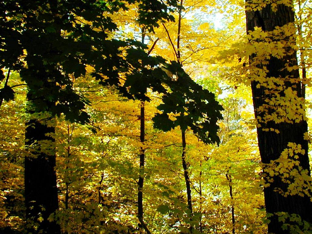 https://i0.wp.com/www.emailguardian.net/wallpaper/gallery/twentytwo/deep-yellow-woods.jpg