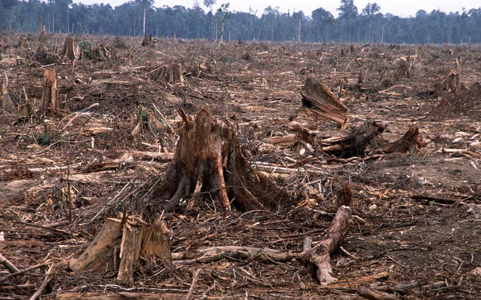Bio-Diversity Destruction – Worse than Climate Change
