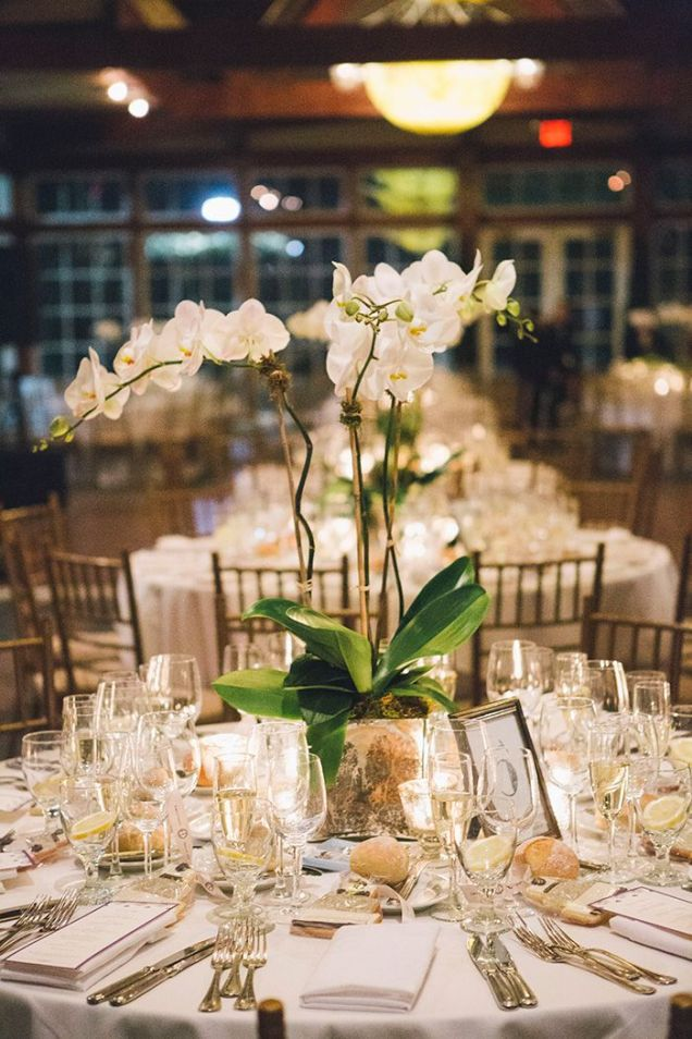 1000 Ideas About Orchid Wedding Centerpieces On Emasscraft Org