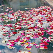 1000 Ideas About Pool Wedding Decorations On Emasscraft Org