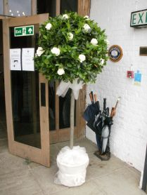 Topiary Trees, White Roses And Topiaries On Emasscraft Org