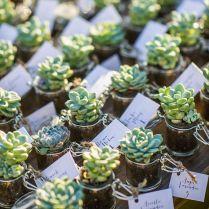 1000 Ideas About Succulent Wedding Favors On Emasscraft Org