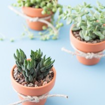 Cheap And Easy Diy Succulent Wedding Favors
