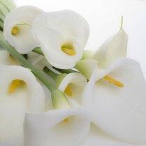 Wedding Flowers And Symbolism