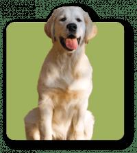 ferita alla zampa trattata con il cerotto veterinario per la cura delle ferite animali
