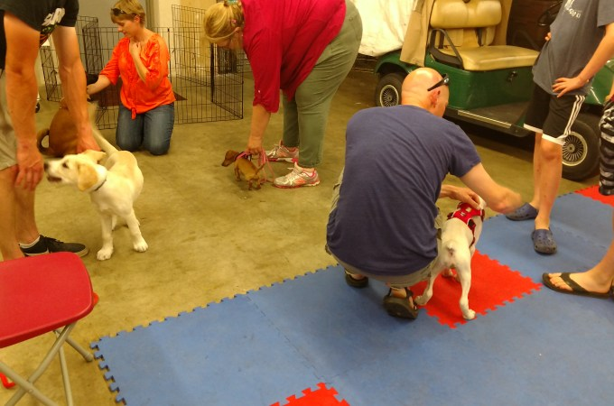 Puppy Training and puppy playtime-which are you paying for?