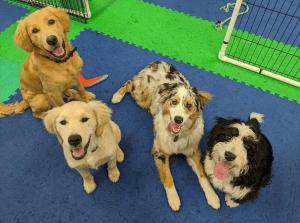 puppy classes bellingham wa puppy quests