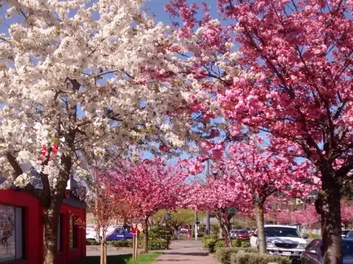 primavera em Victoria no Canadá