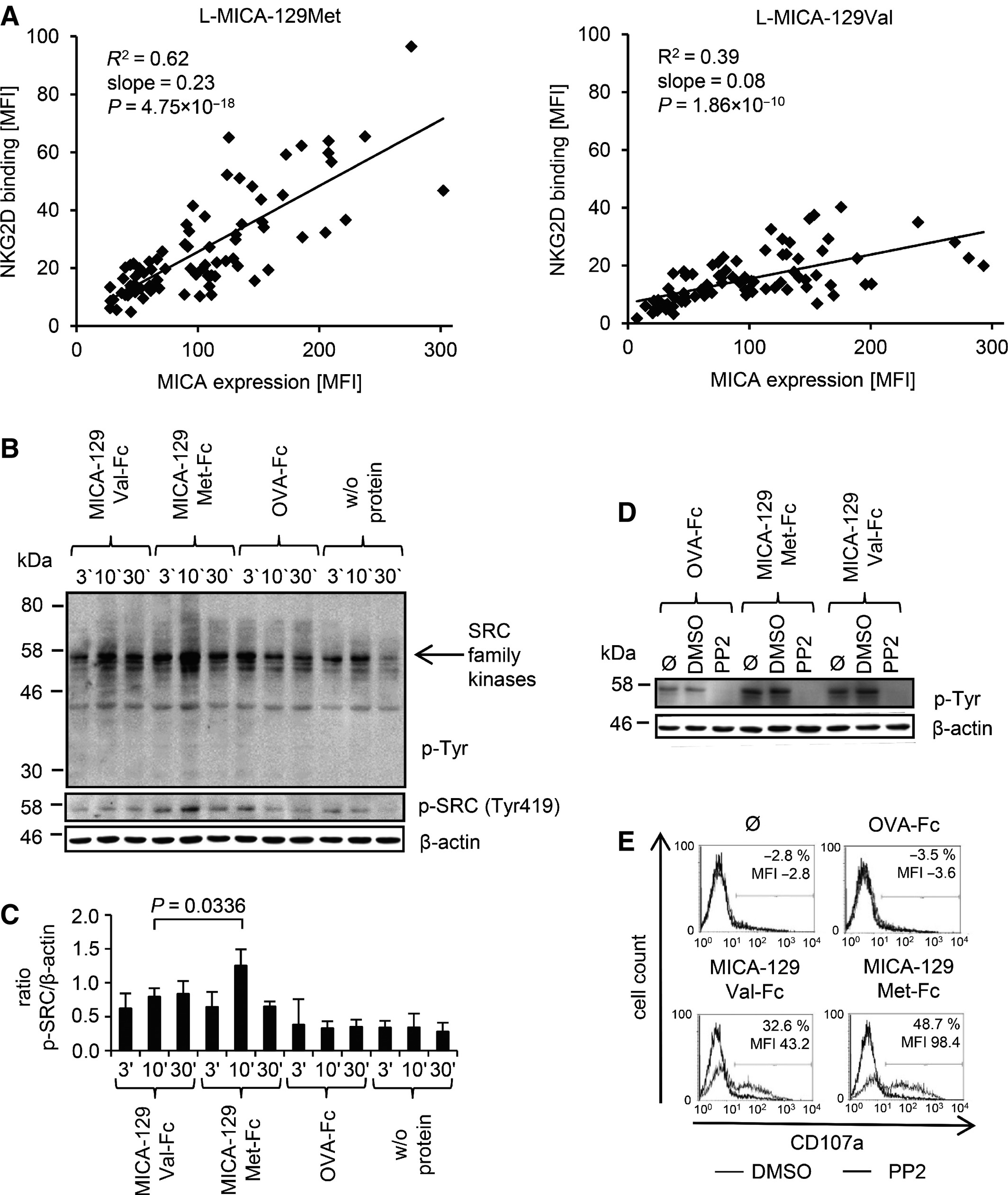 The MICA‐129 dimorphism affects NKG2D signaling and