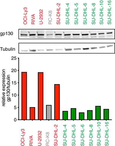 The IL‐6 signaling complex is a critical driver. negative prognostic factor. and therapeutic target in diffuse large B‐cell lymphoma | EMBO ...