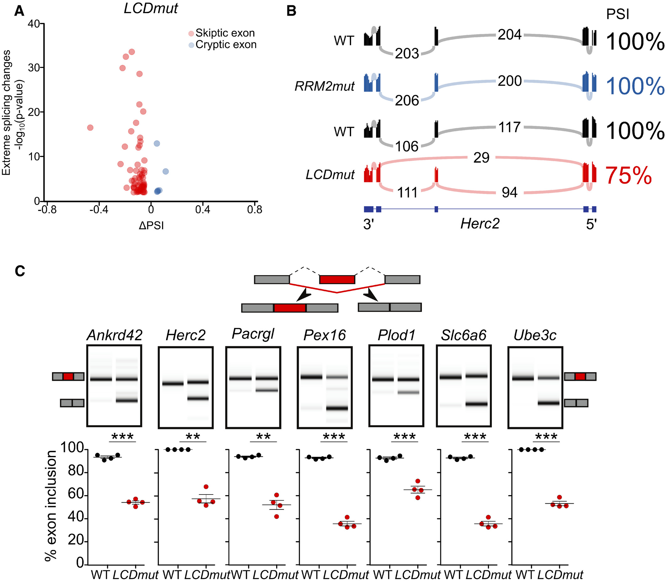 Mice With Endogenous Tdp 43 Mutations Exhibit Gain Of