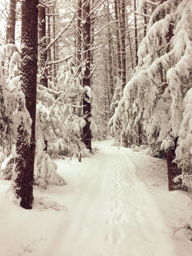 Snowy Hike -- trails