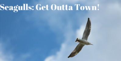 Seagulls: Get Outta Town!