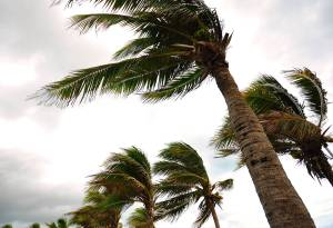hurricane winds blowing palm tree