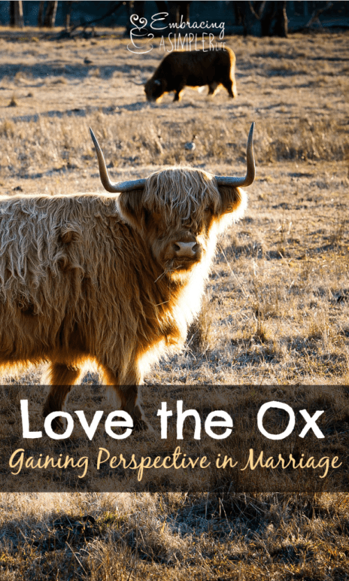 love the ox