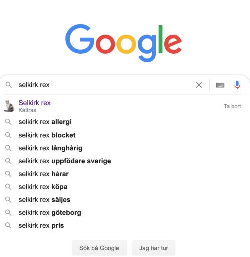 """Google-sökning på """"Selkirk Rex"""", svenska"""