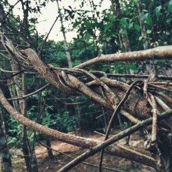 Исцеление аяхуаской. Наркомания