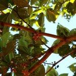 Растения Амазонии