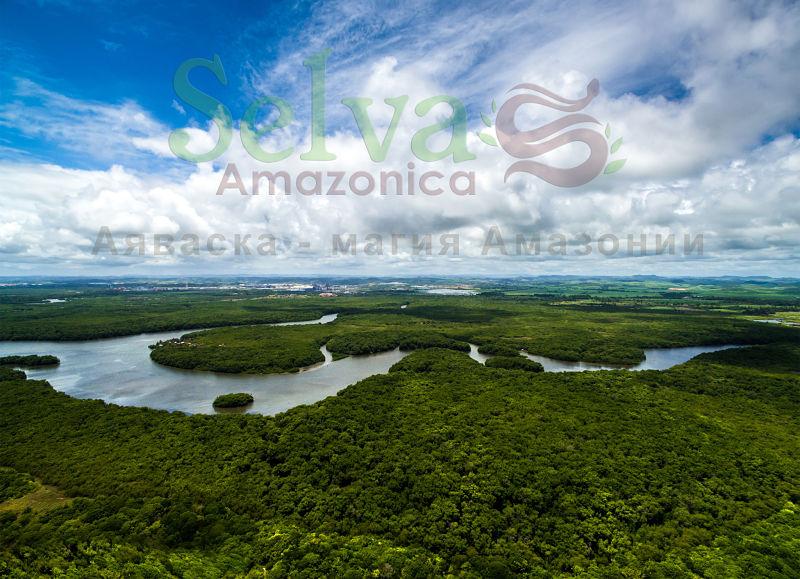 Selva Amazonica. Emerald City