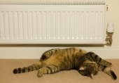 Cat near heater