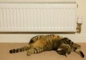 Cat near heater