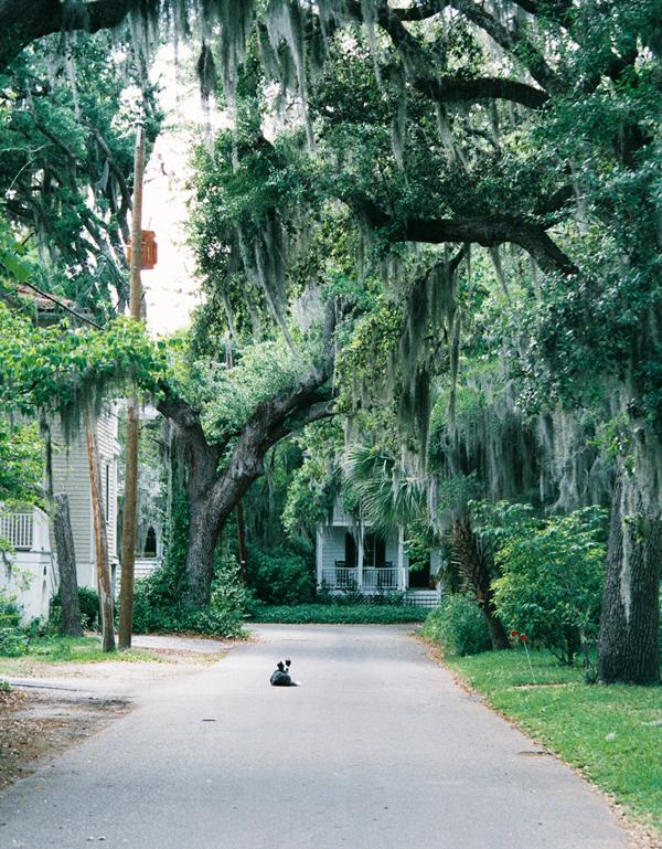 M Home Garden Beaufort Sc
