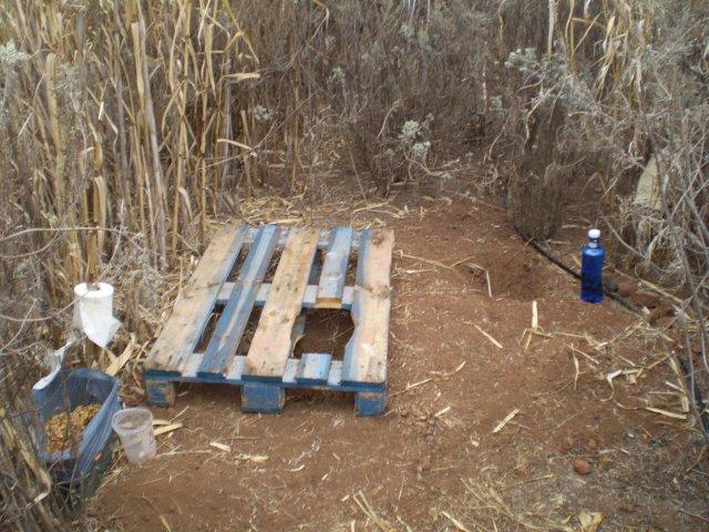 Asta este buda uscată dintre trestii de la ferma din El Sauzal
