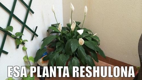 planta editada