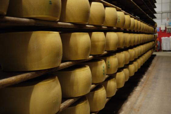 parmesan cheese ageing for 12 months