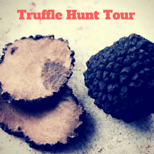Truffle hunt in Italy