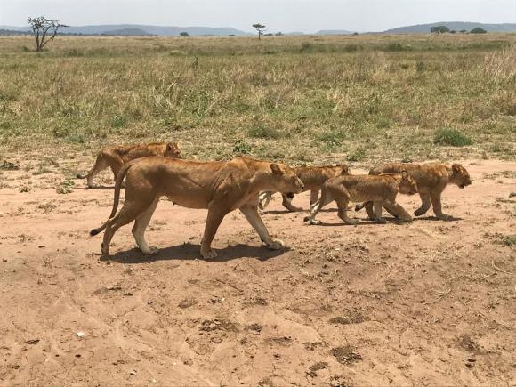Viaje fotográfico Tanzania 2021