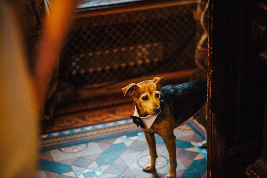 Dog wearing bow tie at wedding