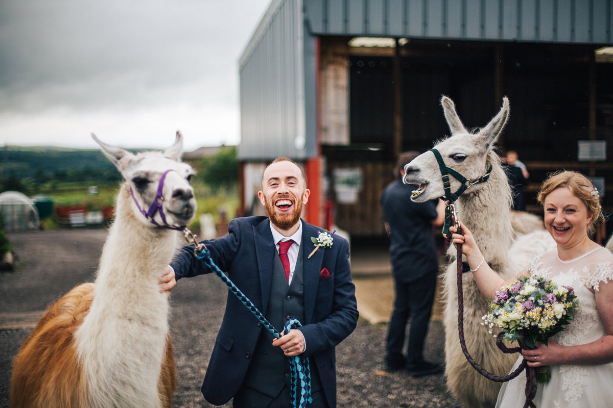 Llamas at your wedding