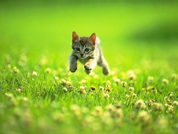 gatito_corriendo-2