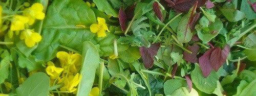 Salad mix with broccoli raab flowers photo by Emily Davidow