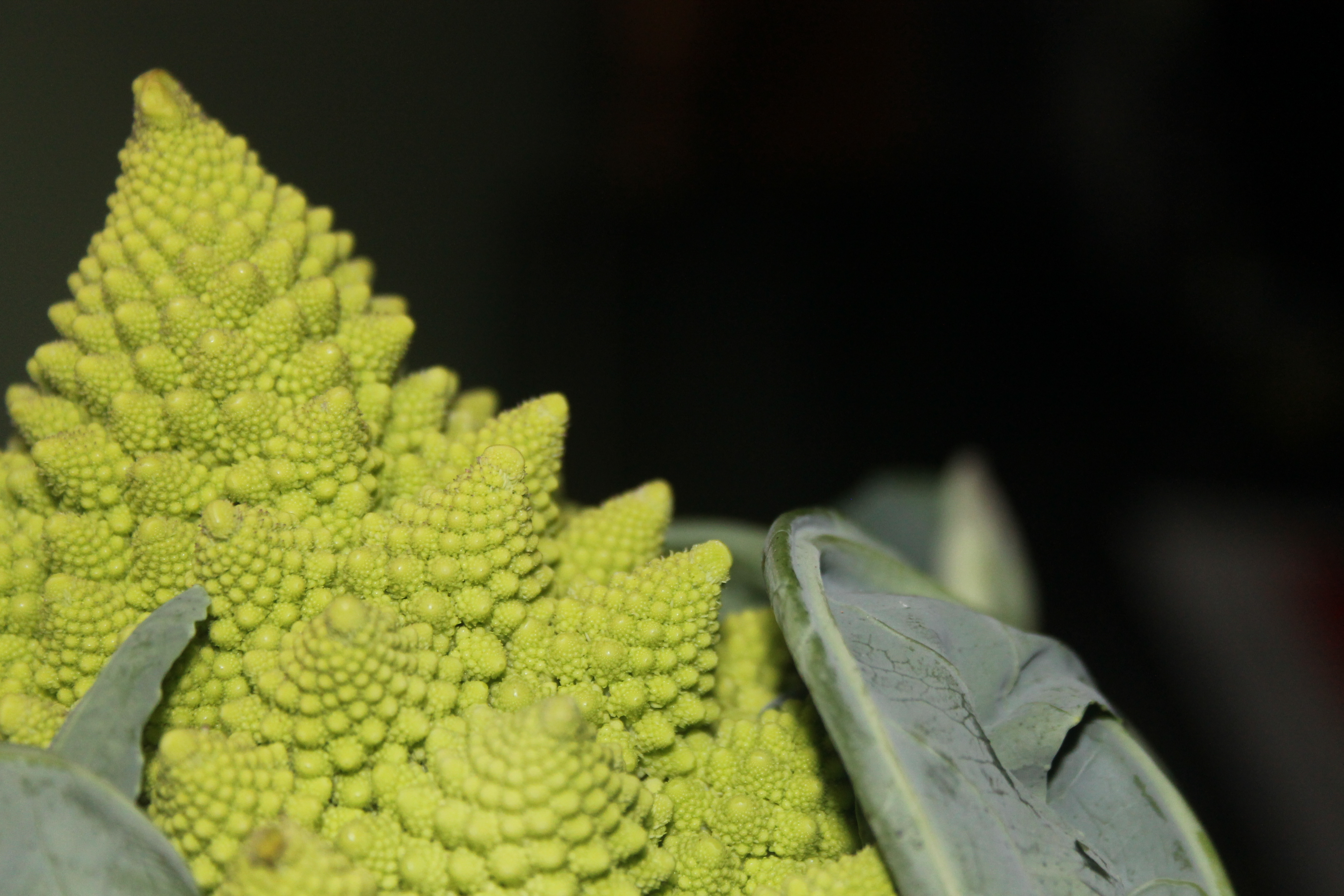 Abstraction of Romanesco Broccoli