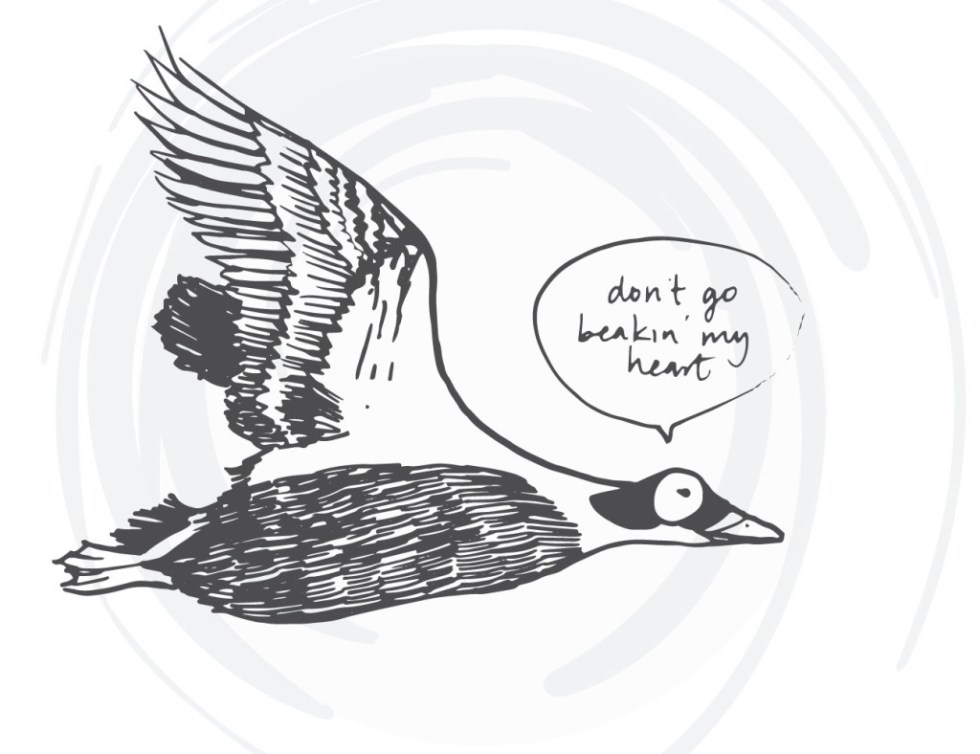 bird-cards-web-11