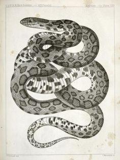 snake8