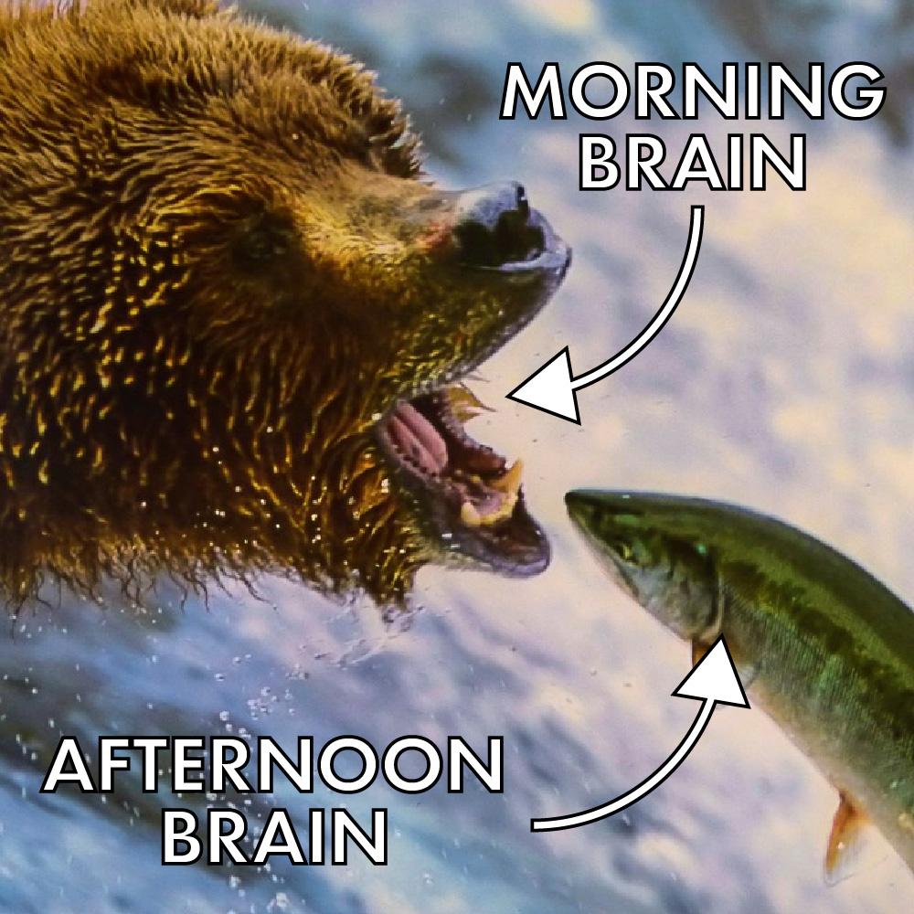 Morning Brain Vs Afternoon Brain
