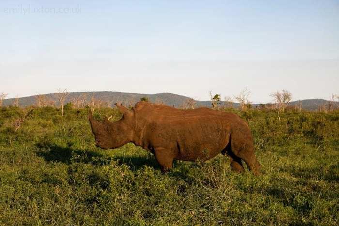 Thanda Safari KZN South Africa