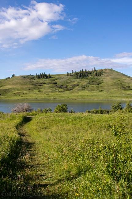 Cyplress Hills Alberta Canada